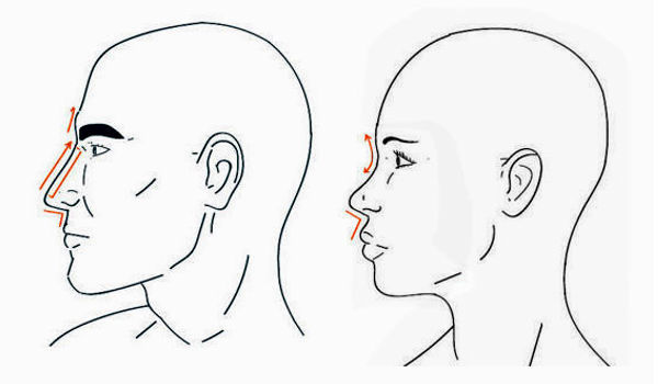 Difference between a female and a male nose